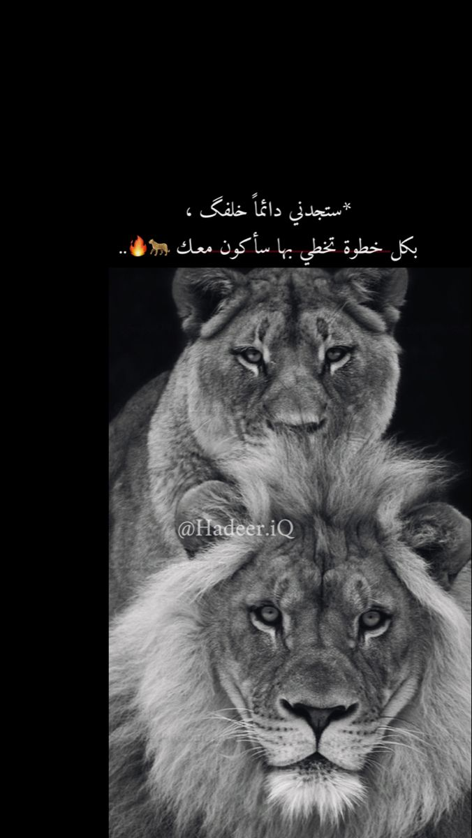 Pin By Lolo Alogyde On Lion اسد Islamic Posters Islamic Quotes Wallpaper Arabic Love Quotes