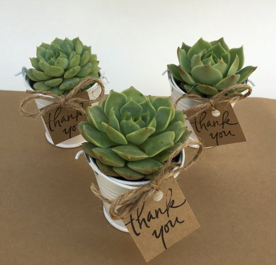 Looking for the perfect, unique gift to give your guests? This listing is for 12 succulent favors in white pails! All thats left for do on arrival is unpack and tie the gift tag around the handle of the pail with the ribbon or twine supplied :)  You will receive: - 12 beautiful, high quality rooted rosette type succulents already planted in white pails approx. 2-2.5 in size. Selection will be a variety of rosette type succulent (based on inventory)- dont worry they are all beautiful! - 12…