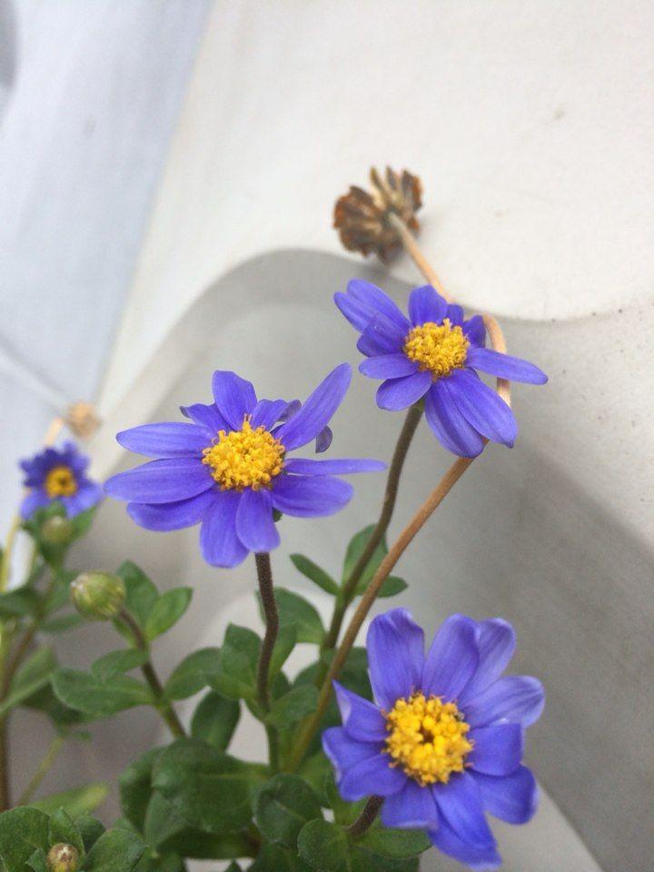 Vivid violet wild flower #omni community