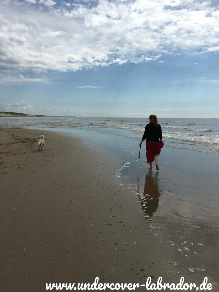 Noordwijk ein Hundestrand zum Niederknien – Undercover Labrador