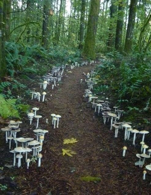 A fungi path located at the Cloud Mtn Retreat in WA