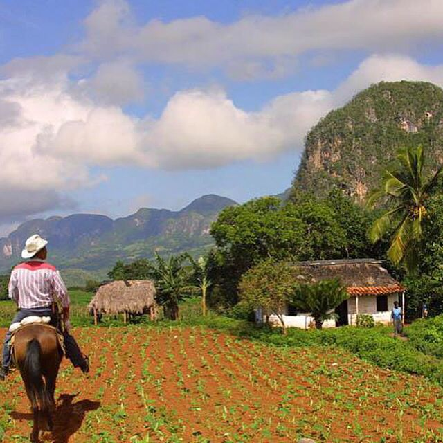 Horse-Riding-Back and Visit our #tabacco Felds #cohiba and learn how to roll a cigar in #vinales #cuba Organized trips for them www.casavinales.jimdo.com for booking #hostel and #bedandbreakfast #UNESCO area gracias y muchos saludos Casa Renga y Julia