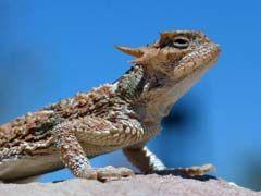 http://www.mypetarticles.com/pet-topics/pet-reptiles/pet-lizards/ - http://www.mypetarticles.com/pet-topics/pet-reptiles/