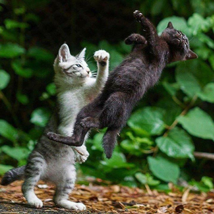 Показать фото камышовой кошки и ее рост планировала пойти