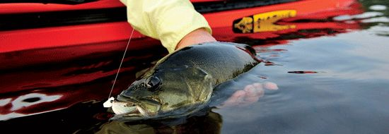 Our most aggressive, accessible, and widespread gamefish. Fly Fishing For Bass