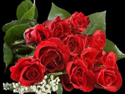 die besten 25 rote rosen ideen auf pinterest rosen sind rot bunte rosen und trauzeugen unter 18. Black Bedroom Furniture Sets. Home Design Ideas