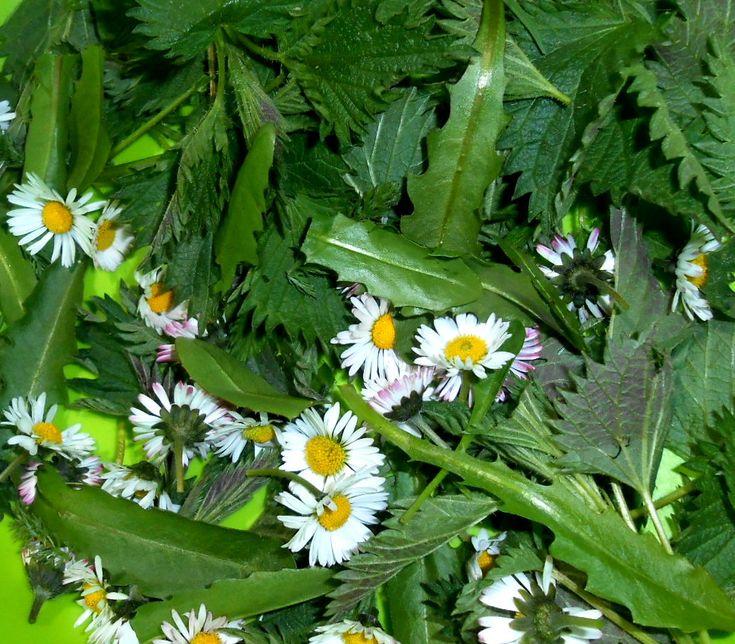 Plevele nám často připadají nezničitelné, avšak příroda ví, proč nám je pořád strká pod nos! Mnoho z nich má léčivé účinky. Zde je 10 nejčastějších plevelů, které můžete využít ku prospěchu svého zdraví!