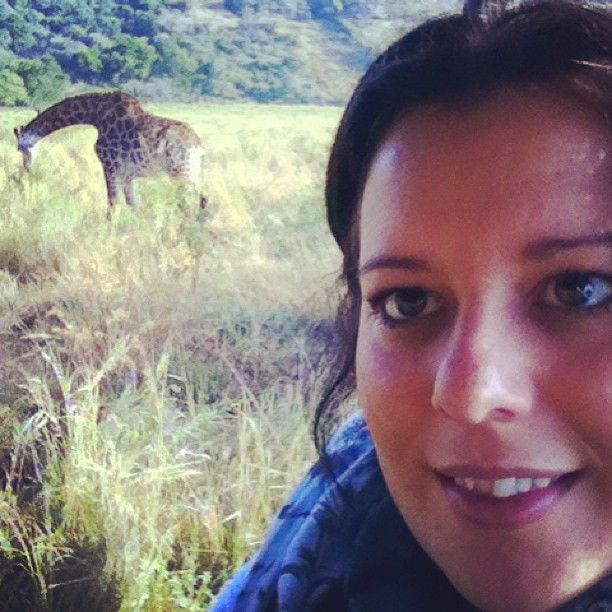 Game driving in South Africa is one awesome experience #southafrica #gamedrive #giraffe