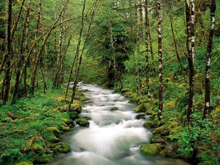forest-river.jpg (1024×768)