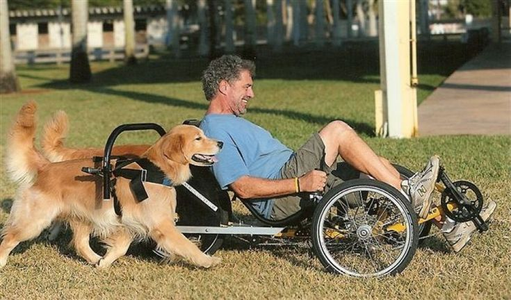 The Greatest (And Most Surprising) Form of #Dog Transportation...Ever.