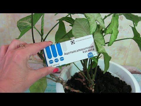 YouTubeКа реанимировать комнатные растения