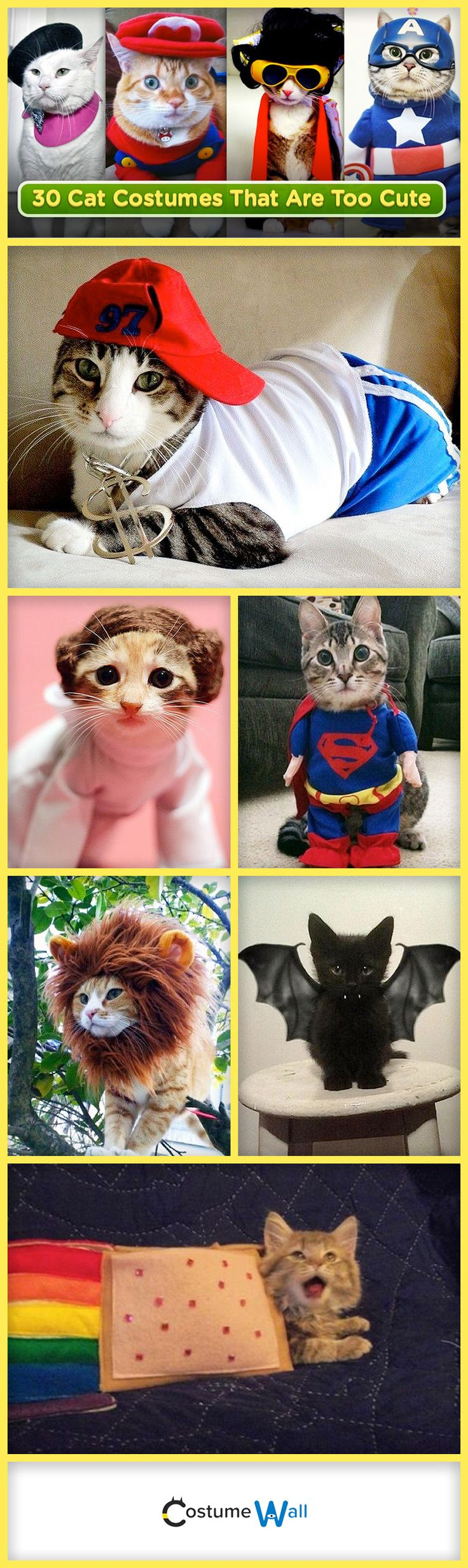 Kittens need to dress up on Halloween too! We found 30 of the very best cat costumes to help you dress up your feline this fall.