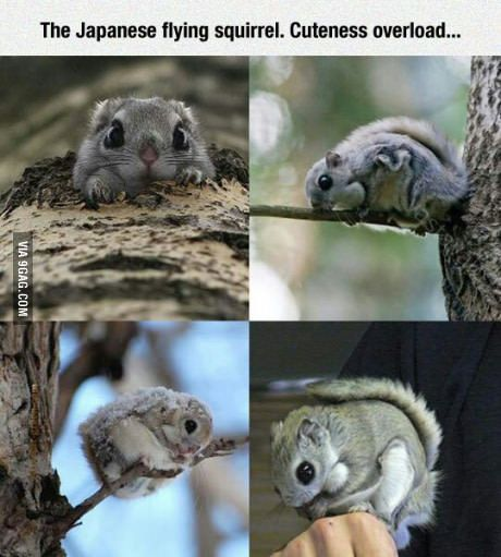 I need to move to Japan...