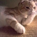 Kitty is intently going at it it and making a big sound while licking and sucking on his paw in this cute cat video.