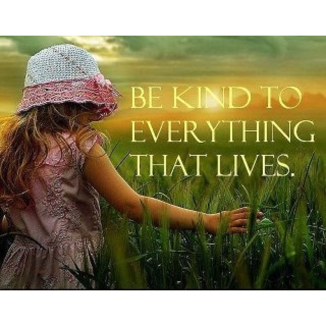 Be kind to everything that lives.: Energy Healing