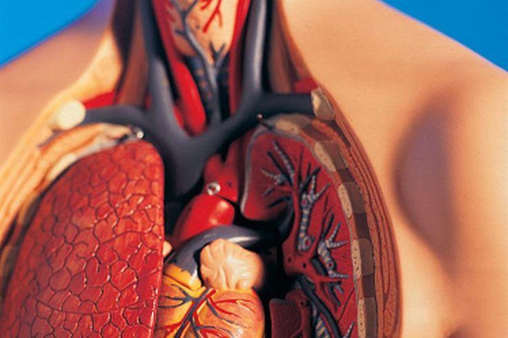 ¿Aumenta el ejercicio el ritmo cardíaco? ¿Por qué? | Muy Fitness