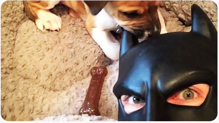 We all love those funny and cute BatDad videos here at Komando.com. I've shown you them before. But this one is probably my favorite so far! You've got to see the hilarious new shenanigans this fun-loving dad gets into this time.