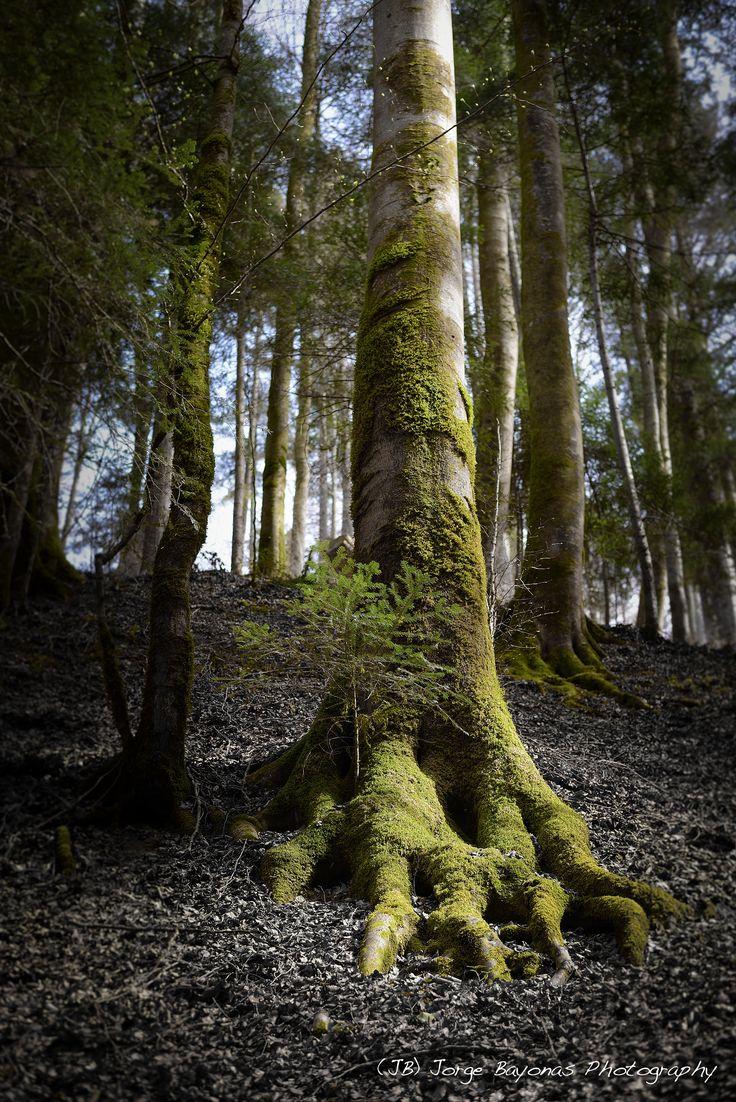 Toes of a Tree - (JB) Jorge Bayonas Photography