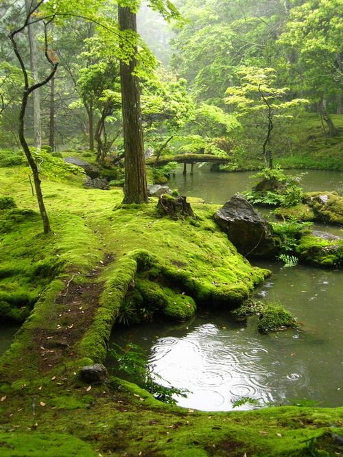 peaceForests, Ireland, Parks, Beautiful, So Pretty, Moss Gardens, Places, Bridges, Kyoto Japan