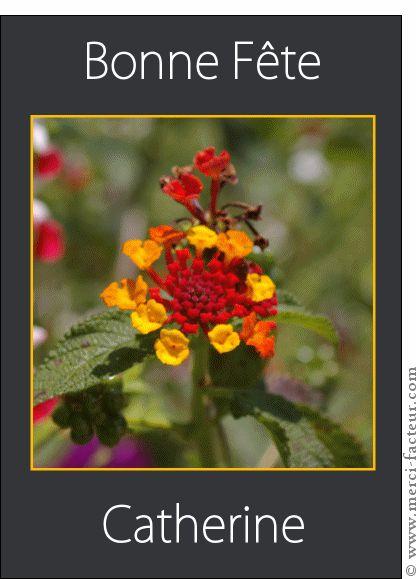 Les 66 meilleures images du tableau sainte catherine for Envoyer fleurs par internet