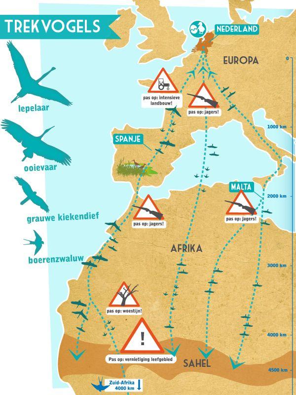 Infographic migratieroutes trekvogels voor 'Beleef de Lente' van de Vogelbescherming