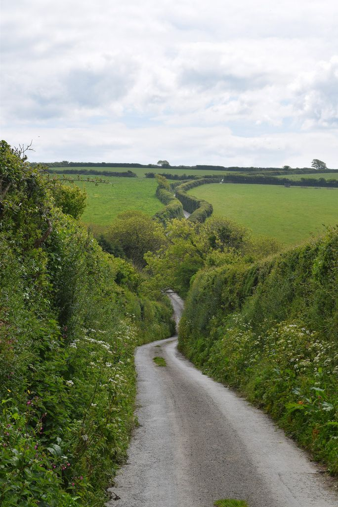 The road to Trevance, Cornwall, England. A classic British single track lane with, and sometimes without, passing places :)