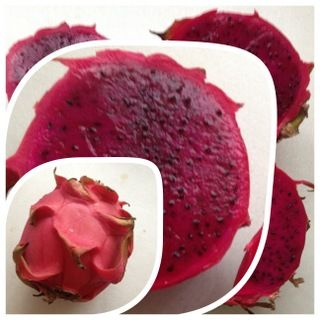 Fevers and dragon fruit | Pen's Personal Pages