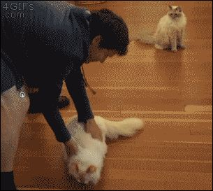"""CAT HUMOR 