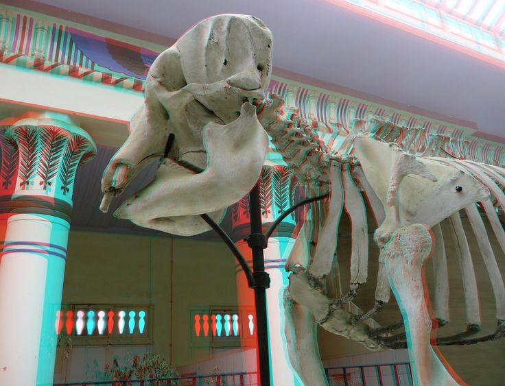 https://flic.kr/p/9X4oFE   Zoo Antwerpen 3D   Zoo Antwerpen 3D