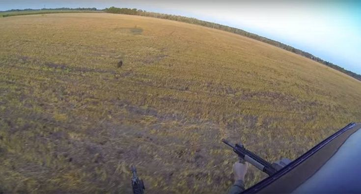 A Better Way to Bring Home the Bacon: Aerial hog hunting.