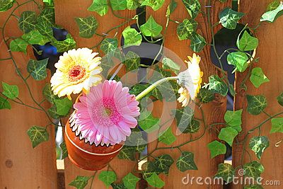 Pitcher with daisies hanging on a wooden fence and green leaf.