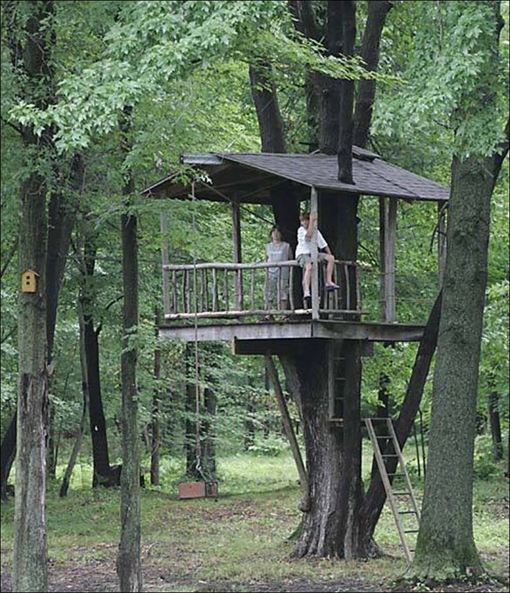 113 Best Images About Tree House On Pinterest Trees A