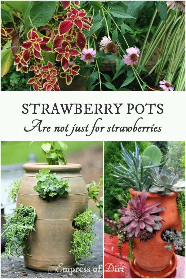 1000 Ideas About Strawberry Pots On Pinterest Grow