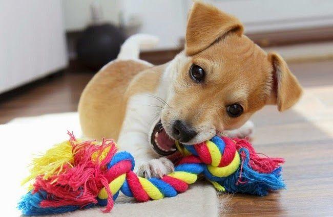 Jak zorganizować psu czas nie wychodząc z mieszkania