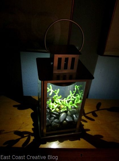 Solar powered terrarium - made from a lantern, a solar light, and some rocks. Very simple DIY but looks awesome! #Lantern #Terrarium #DIY - pb†å