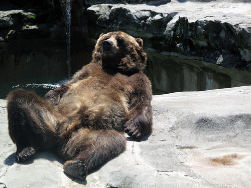 relaxation: Animals, Chilling, Animal Kingdom, Bears, Funny Stuff, Things, Furry Friends