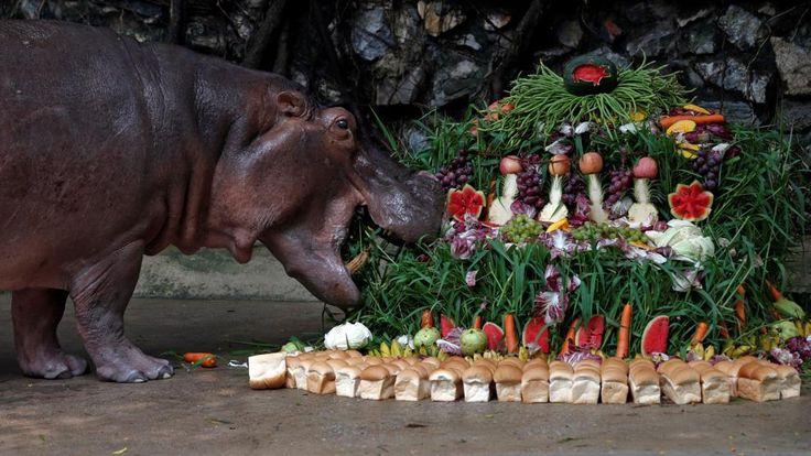 Desde la mayor fiesta post-apocalíptica en California hasta el enorme pastel de frutas para el 50 aniversario del hipopótamo Mali, las historias de este viernes