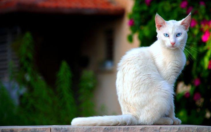 Czy kot musi wychodzić na dwór?