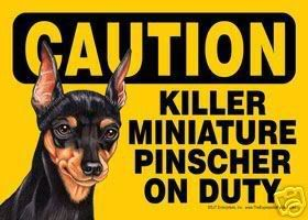 Min Pin Puppy Photo:  This Photo was uploaded by ndappleb. Find other Min Pin Puppy pictures and photos or upload your own with Photobucket free image an...