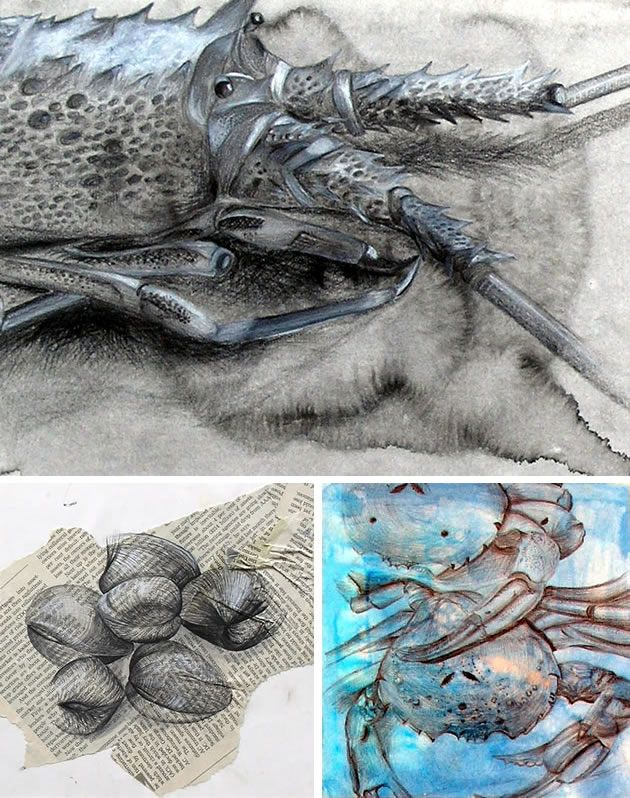 crayfish, crabs and crustaceans - IGCSE Art exam