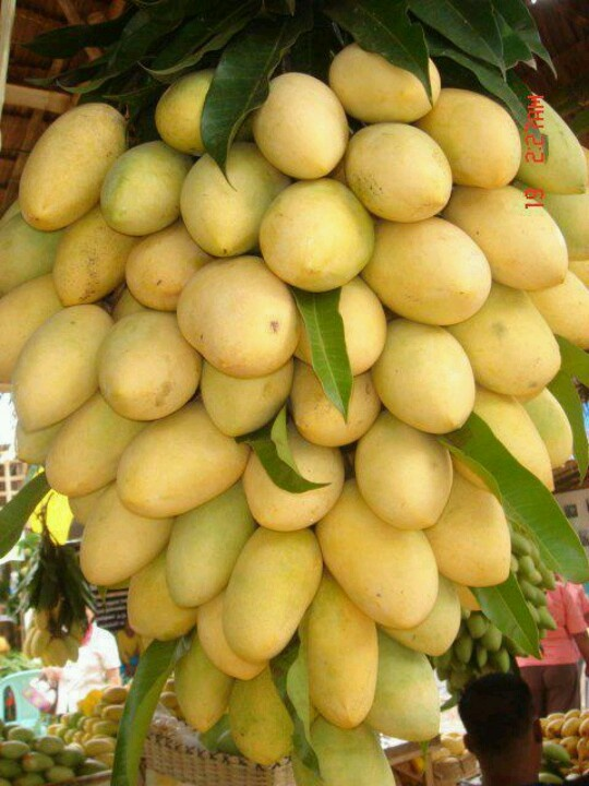 World's yummiest mangoes, in the Philippines, where else?