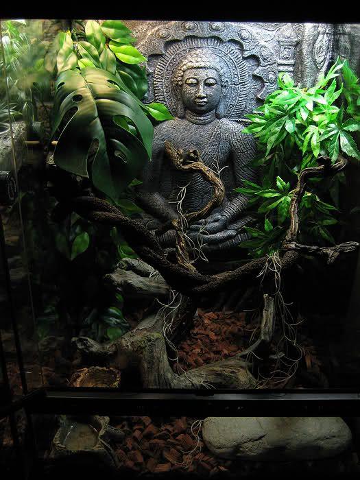 My Sri Lanka Crested Gecko tank - Reptile Forums