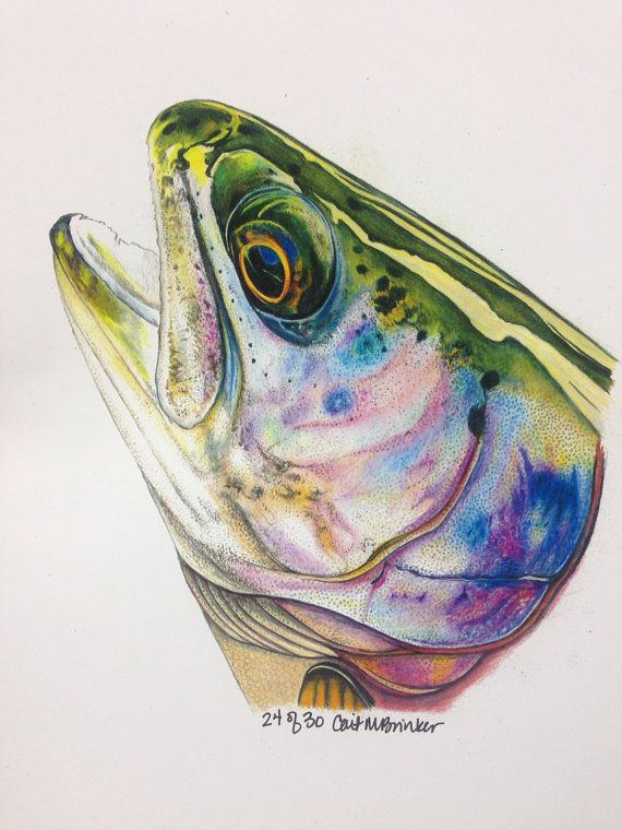 1324 best desenhos lapis grafite images on pinterest for Best trout fishing near me