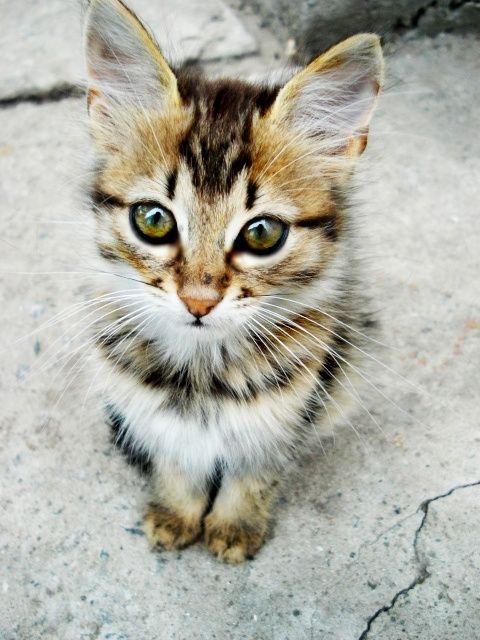 Adorable cat!