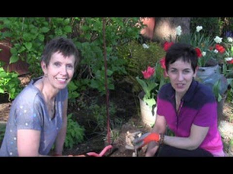 Episode 117 How To Plant Dahlia Tubers Youtube Dahlia Gardening For Beginners Plants