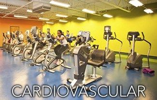 Go Workout #toning #workouts #for #women #at #home http://fitness.remmont.com/go-workout-toning-workouts-for-women-at-home/  Go Workout offers a large selection of cardiovascular machines situated on the upper level overlooking the main workout floor. Our cardio area features treadmills, cross trainers, ellipticals, stair climbers, recumbent and upright bikes, upper body ergometer and cardiovascular entertainment. Go Workout offers personal training programs by certified personal trainers…
