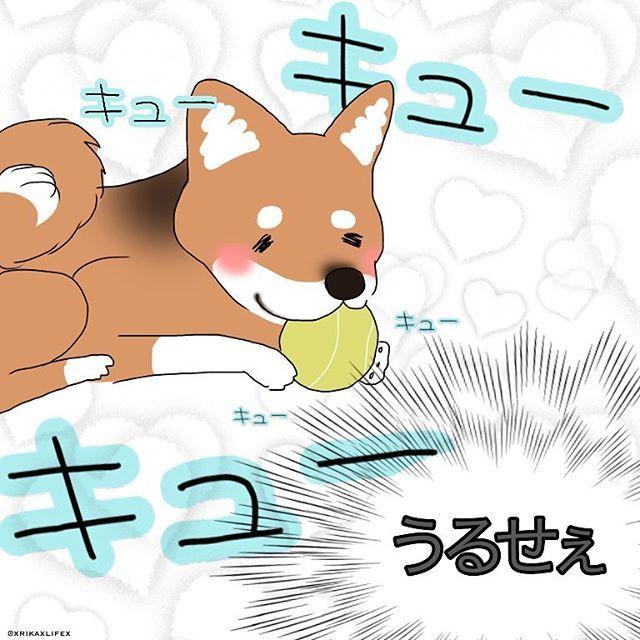 お預かり中の芝犬くん、 幸太のキューキュー鳴るテニスボールが気に入ったようで キューキューキューキューキューキューキューキューキューキューキューキュー :(;゙゚'ω゚'): ・ 幸太より顎の力が強いので、大音量で盛大に噛み噛みしています。笑 ・ うるへーーぇ ・ #絵日記#日記#イラスト#ワンコ#愛犬#チワワ#チワワミックス#シェルター#里親#新米飼い主#主婦#専業主婦#アメリカ#アメリカ生活#海外#海外生活#ほぼ日#ほぼ日もどき#ブログ#アメブロ#ペットシッティング#ペットシッター#犬のお世話#犬の散歩#バイト#芝犬