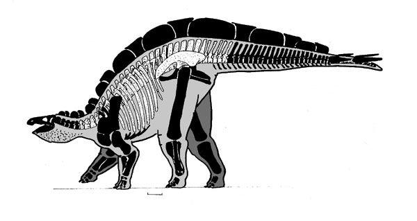 Resultado de imagen de wuerhosaurus skeleton