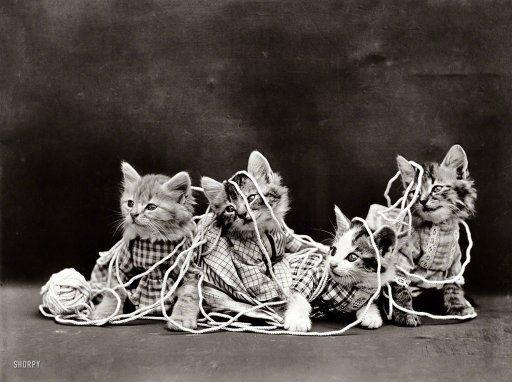 Knitting Kittens: 1914