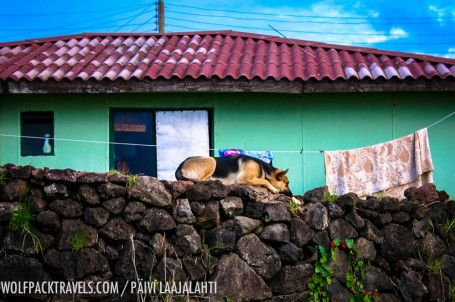 Dogs of Easter Island - Rapa Nui http://www.wolfpacktravels.com/lookbook-dogs-of-easter-island-and-one-cat/